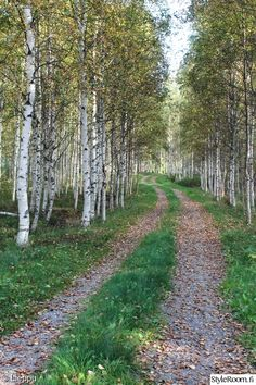 🇫🇮 Lane through the birches in autumn 🍂 (Finland) [photographer unknown] cr. Beautiful World, Beautiful Places, Forest Path, Back Road, Walk In The Woods, Farm Life, Pathways, The Great Outdoors, Countryside