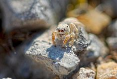 Jumping spider by Jumping Spider, All The Small Things, Creepy, Wildlife, Spiders, Animals, Animales, Spider, Animaux