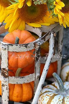 Autumn Beauty ♥ #pumpkins and #sunflowers
