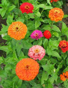 Balcony Garden, Garden Plants, Special Flowers, Dream Garden, Beautiful Roses, Fruit, Outdoor, Life, Spring
