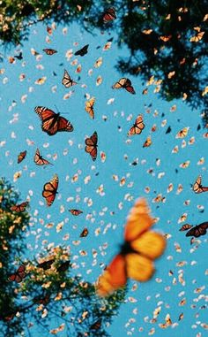 Butterfly Wallpaper Iphone, Iphone Wallpaper Vsco, Iphone Background Wallpaper, Girl Wallpaper, Trendy Wallpaper, Cool Pictures For Wallpaper, Disney Wallpaper, Aztec Wallpaper, Wallpaper Quotes