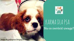 KARMA DLA PSA. Na co zwrócić uwagę?http://instrukcjadopsa.blogspot.com/2015/06/karma-dla-psa-na-co-zwrocic-uwage.html