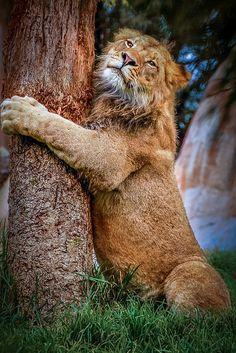 Tree Hugger !!