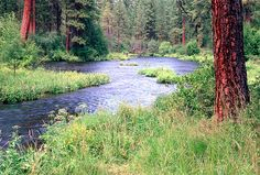 The Metolius river is one of my favorite places to camp in Oregon.