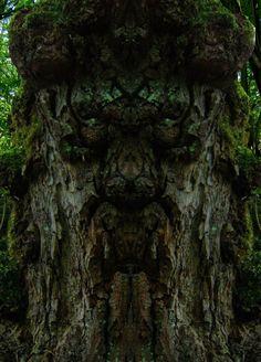 Baum mit menschlichem Gesicht. Foto von E.S.