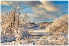 December Morning: Photograph by John David Geery of Clarendon, Vermont  I LOVE winter!<3