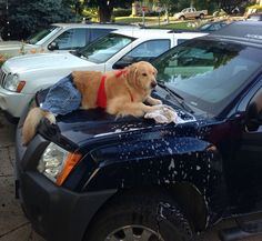 """Remember that funny picture of a beautiful golden retriever seated at a computer with the caption """"I have no idea what I'm doing?"""" Her owner has come forward with more hilarious photos of her dog doing human things and being totally confused."""