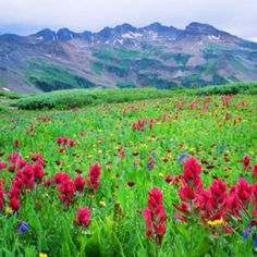 Beautiful field of flowers in Colorado, from the Nature Conservancy