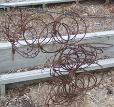 Pea trellis from old rusty bed springs