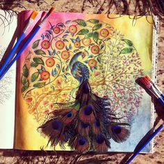 Pavão misterioso, pássaro formoso..... #pavão #pavãomisterioso #jardimsecreto #jardimsecretoinst #jardimsecretoinspire #peacock #rainbow #aquarela