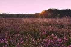 Coucher de soleil sur la Osterheide - Lande de Lunebourg