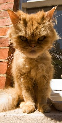 "I think this cat is def way more grumpy than ""grumpy cat""! Pin this pic if u agree:)"
