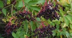 natural hedgerows - Google Search