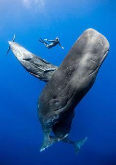 Whale dance. Google+
