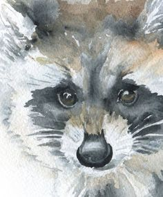 Baby Raccoon watercolor giclée reproduction. Landscape/horizontal orientation. Printed on fine art paper using archival pigment inks. This quality printing allows over 100 years of vivid color in a ty