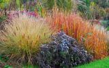 Ziergräser mit Herbstfärbung