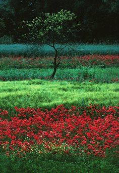 L'image contient peut-être: plante, fleur, arbre, herbe, plein air et nature