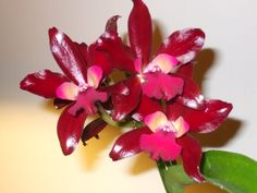 Orchid bloomed 2008