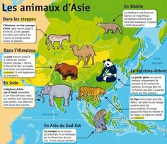 Les animaux d'Asie French Course, Article Search, Les Continents, French Class, France, Learn French, French Language, Social Studies, Wordpress Theme