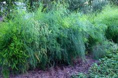 1000 Images About Companion Plant On Pinterest 400 x 300