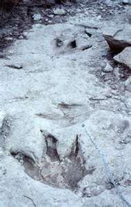Dinosaur Valley State Park,   Glen Rose, Tx  (dinosaur footprints everywhere)