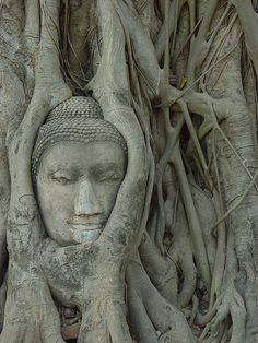 Angkor Wat, Siem Reap, Cambodia: harmonic infusion of nature and archeology at this ancient temple. #monogramsvacation