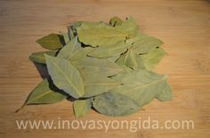 Laurel Leaves  Origin: Turkey  Packaging: 1, 5, 10 kg bags are available.   To request an offer, please fill out our offer form.  www.inovasyongida.com  Contact us: info@inovasyongida.com