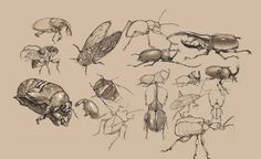 Hojee Pojee: Some stuff from Dynamic Sketching with Peter Han