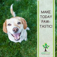 Make today and  everyday PAWTASTIC! https://multibra.in/xnkgb