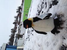 Unser Maskotchen Penguins, Animals, Acoustic, Superheroes, Animales, Animaux, Penguin, Animal, Animais