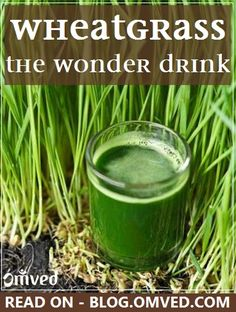 WHEATGRASS juice is prepared from the cotyledons of the common wheat plant, Triticum aestivum. It is rich in vitamin A, vitamin C, and vitamin E, iron, calcium, magnesium, and amino acids. Its innumerable benefits are the reason it is called the WONDER DRINK..here are some benefits..