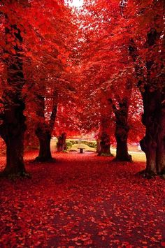 Such a beautiful red picturesque scene - we love it when the autumn leaves start… Beautiful Photos Of Nature, Nature Photos, Beautiful Landscapes, Beautiful World, Beautiful Places, Beautiful Pictures, Simply Beautiful, Red Pictures, Red Tree