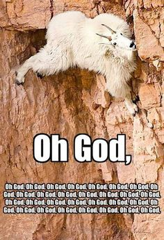 Religious goat>>>I don't think the religious affiliations of this goat is the point of the picture...