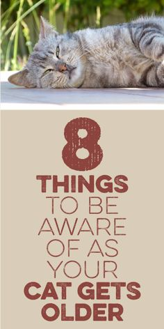 8 Things To Be Aware Of As Your Cat Gets Older