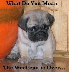 Funny dog Sunday Monday