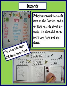 Insects can, have, are Free recording sheet-Golden Gang Kindergarten: April 2012 Kindergarten Science, Elementary Science, Science Classroom, Teaching Science, Teaching Resources, Kindergarten Projects, Classroom Ideas, Teaching Ideas, Writing Resources