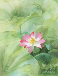 Nelumbo Painting by Robert Hooper - Nelumbo Fine Art Prints and Posters for Sale