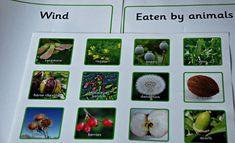 Seed dispersal sorting activity from Twinkl Resources Sorting Activities, Learning Activities, Activities For Kids, Seeds Preschool, Seed Dispersal, The Tiny Seed, Animal Adaptations, Science Programs, Plant Science