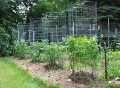 Green Zebra Market Garden: Make Your Own Sturdy Tomato Cages