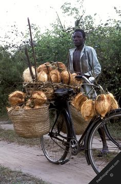 carrying coconuts #bike #bicycle