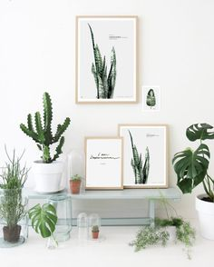 House Plants, Succulents, Cactus And Indoor Gardens Potted Plants And Botanical Design For The Indoor Garden Indoor Garden, Indoor Plants, Potted Plants, Plantas Indoor, Turbulence Deco, Interior Decorating, Interior Design, Interior Plants, Green Plants