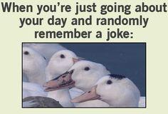 GIF: Jokes - www.gifs-gif.com