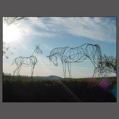 HORSE ART by Amy Goodman, sculptor & portrait artist, www.amygoodman.co.uk