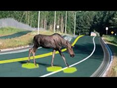 Solar FREAKIN' Roadways! - YouTube