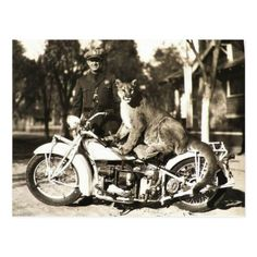 vintage photo of police officer on motorcycle puma exotic pets lions tigers bikes black and white cops Virago Bobber, Honda Bobber, Triumph Bobber, Bobber Bikes, Harley Bobber, Bobber Motorcycle, Bobber Chopper, Motorcycle Girls, Motorcycle Garage