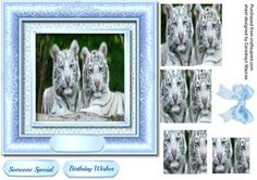 Beautiful White Tigers in a Blue Frame pyramid  on Craftsuprint - Add To Basket!