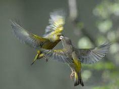 de aves hermosos - Buscar con Google