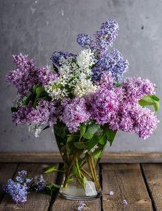 Heaveninawildflower — katysflowersandantiques: Lilac.