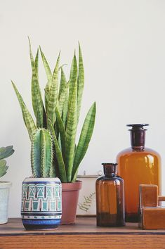 vintage ceremic and glass jars with plants / Home decoration / Styling
