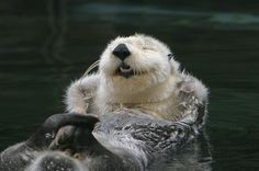 Otter is Happy! :D